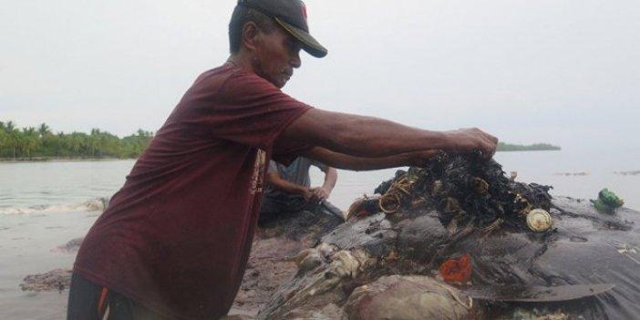 Balinanın midesinden 6 kilo çöp çıktı!