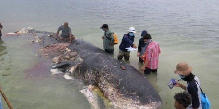 Ölü balinanın midesinden çıkanlar şaşkına çevirdi
