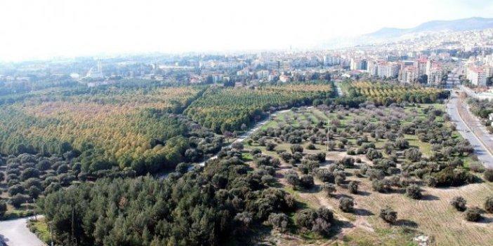 Erdoğan talimat verdi: Koruluk millet bahçesi oluyor