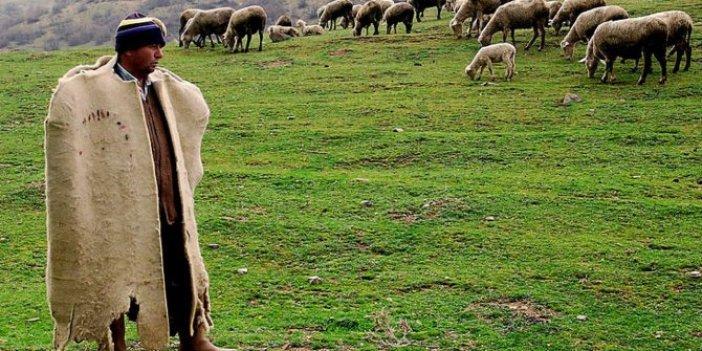 Çobanlar bile ithal!