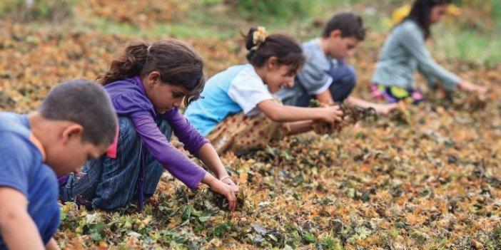 CHP'li Ağbaba: Türkiye'de kayıt dışı 600 bin çocuk işçi var