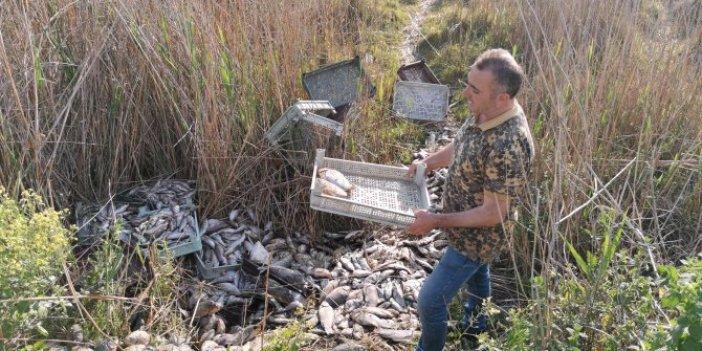 İznik'te 1 ton balığı piknik alanına atıp kaçtılar