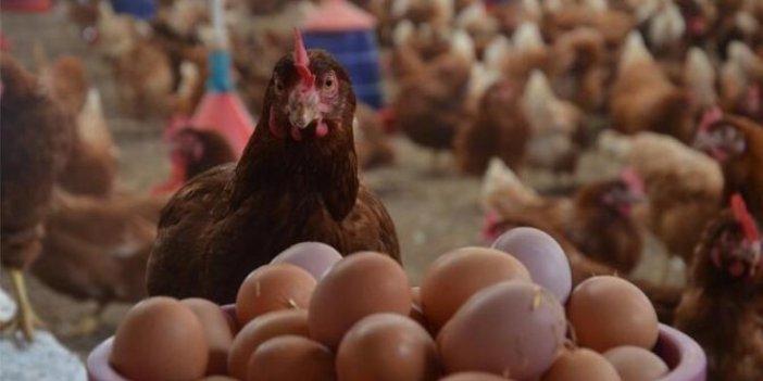 Yumurta üretimi azaldı