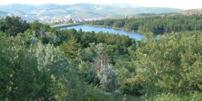 Türkiye'nin ilk milli parkında ağaç katliamı