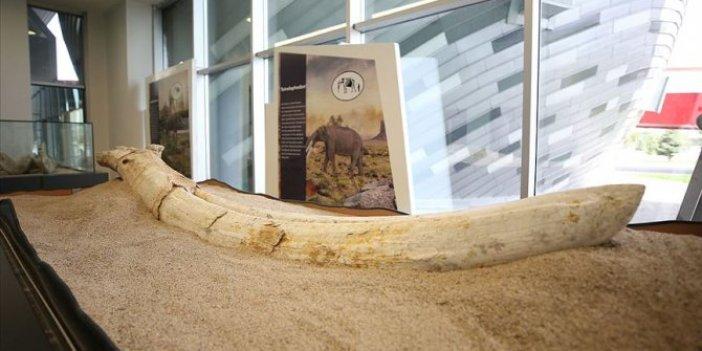"""Finlandiyalı fosil uzmanı: """"Yeni bir türe ait olabilir"""""""