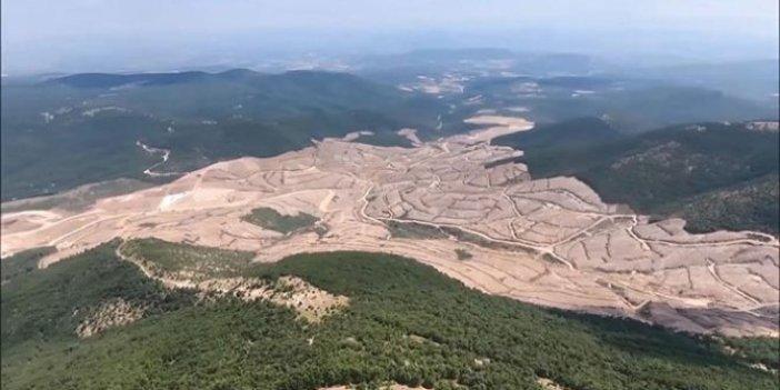 Kaz Dağları'ndaki çevre katliamının boyutları ortaya çıktı!