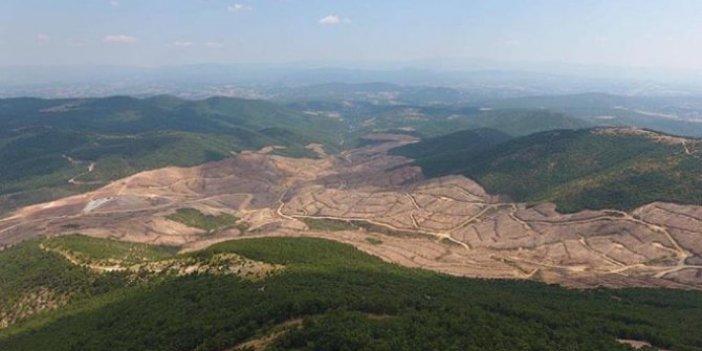 Yüz binlerce ağacı katletmişti: Kanadalı şirket, projeyi iptal etti