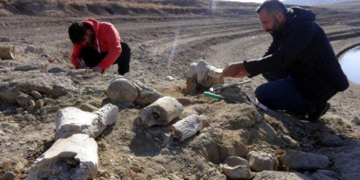 Kayseri'de 7.5 milyon yıllık yeni fosil bulundu