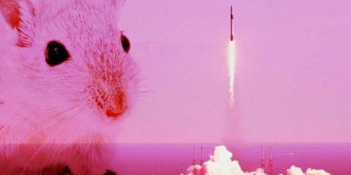 Uzaya gönderilen farelerden haber geldi