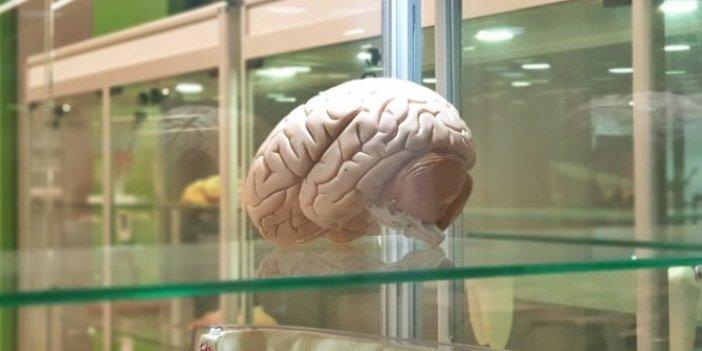 Beyin implantları ile hafızayı güçlendirmek mümkün!
