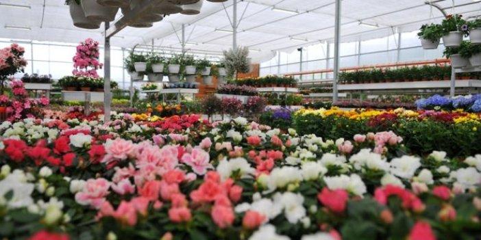İBB, yerli çiçek üreticileri ile buluşacak