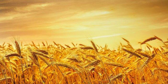 Buğday ithalatı, ekim alanlarını azaltabilir!