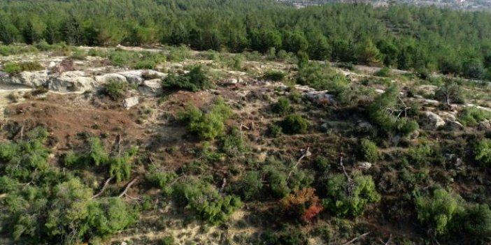 72 dönümlük ormanda ağaç kıyımı