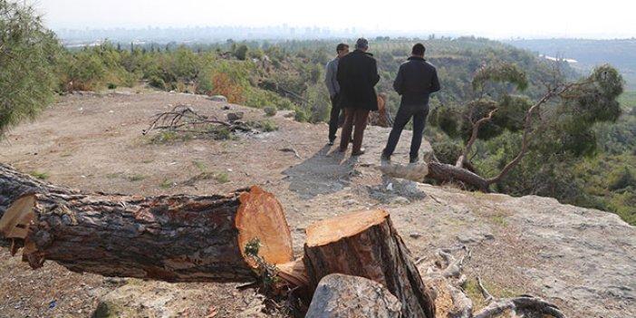 Ağaç kıyımının yapıldığı alan yeniden yeşillendirilecek