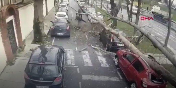 İstanbul'da korkutan anlar! Üzerlerine ağaç devrildi
