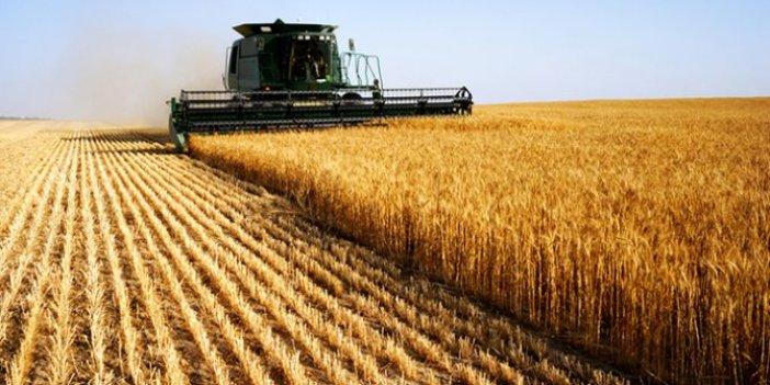 Buğday üretimi yüzde 5 azaldı!