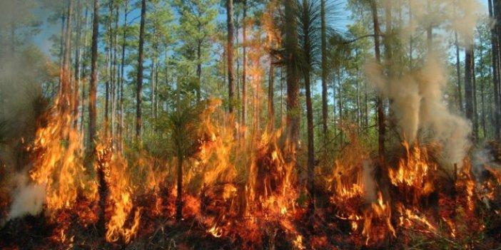 6 yılda 60 Milyon ağaç kül oldu!