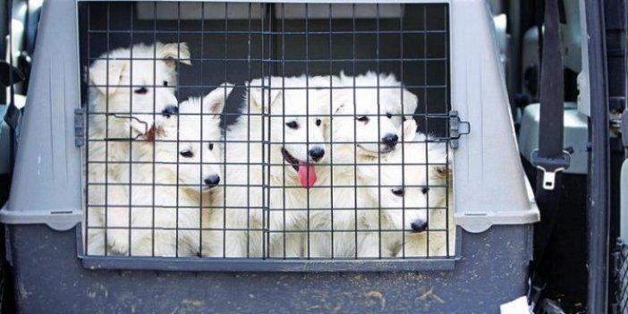 Evcil hayvan sahiplerini sevindiren karar