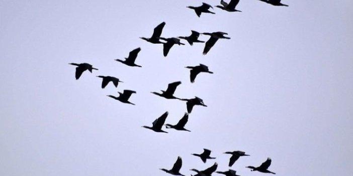 Veterinerlerden uyarı: 'Ölü kuşlara dokunmayın'