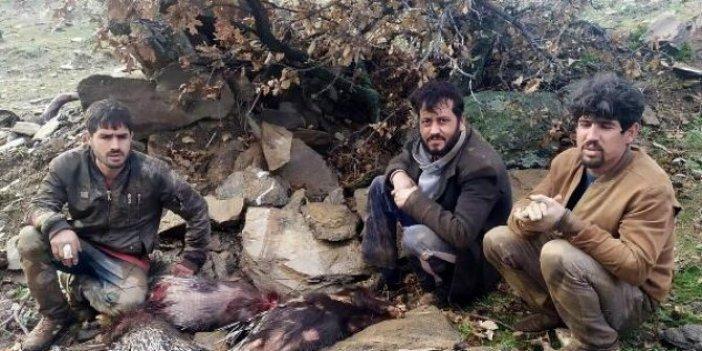 'Eti şifalı' diye kirpi avlayan Suriyelilere para cezası
