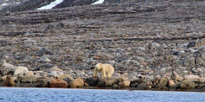 Antartika'da rekor! Kutup bölgeleri hızla ısınıyor