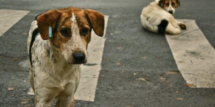 AKP'li belediyeden tepki çeken cevap: Köpekler görüntü kirliliği