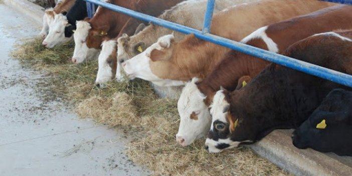 Şarbon, hayvan pazarını kapattırdı