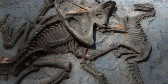66 milyon yıllık dinozor fosilinde kanser teşhisi!