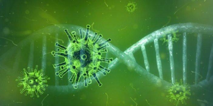 Korona virüs aşısı bulundu mu? Korona aşısında son durum ne?