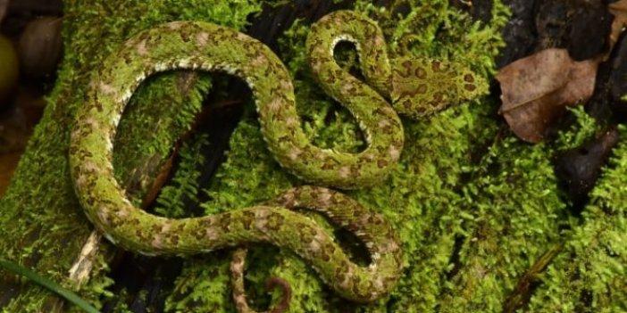 Yağmur ormanlarındaki gizli şehrin bilinmeyen canlıları!