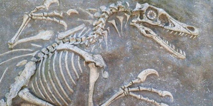 67 milyon yıllık dinozor fosili bulundu