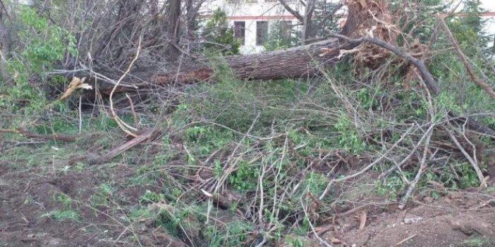 Ankara Saraçoğlu'da ağaç katliamı