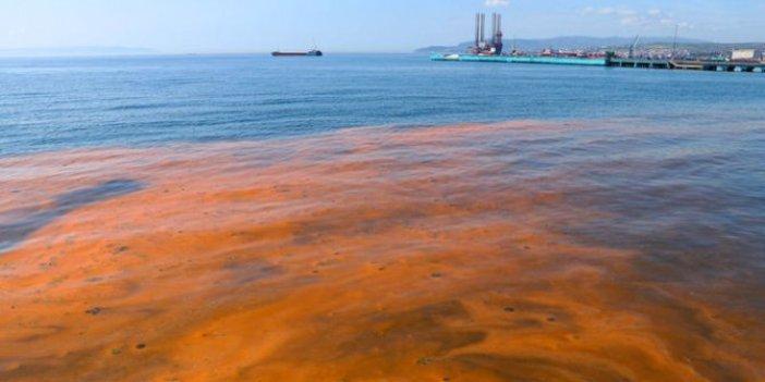 Marmara Denizi'ni bekleyen tehlike! Toplu ölümler olabilir