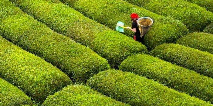 İçişleri Bakanlığı'ndan çay genelgesi