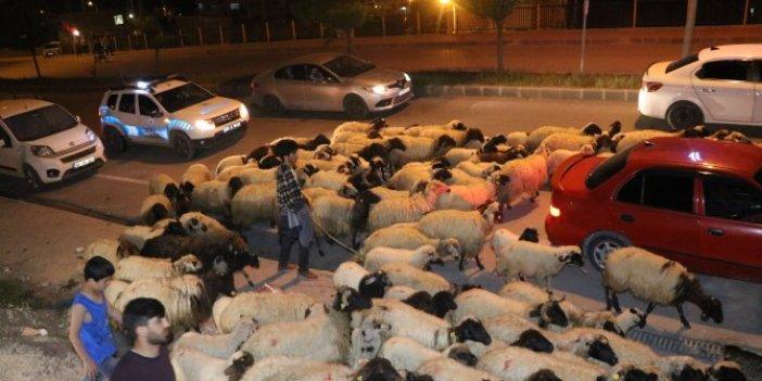 Koyunlar caddeye indi