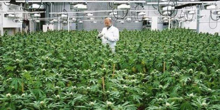 Büyükşehir Belediye Başkanı canlı yayında açıkladı: 'Kenevir üretimine başlıyoruz'