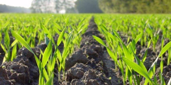 Bitkisel üretimin artması bekleniyor
