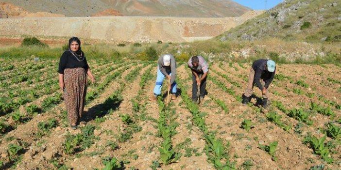 Bedava arazi devletten, işlemesi çiftçiden