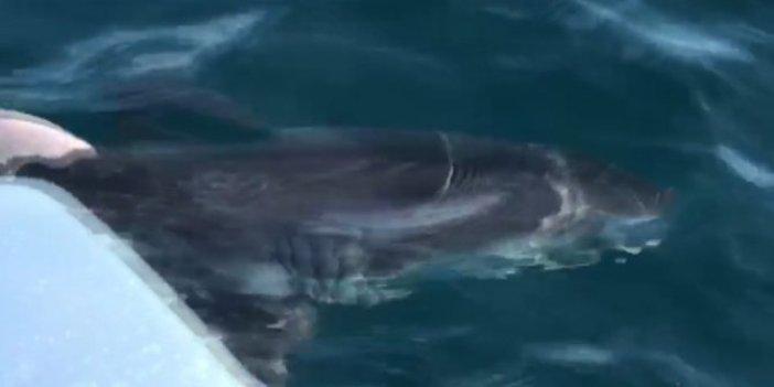 Hiç bu kadar kıyıya yakın görülmemişti: Türkiye sahillerinde ilk köpek balığı alarmı!