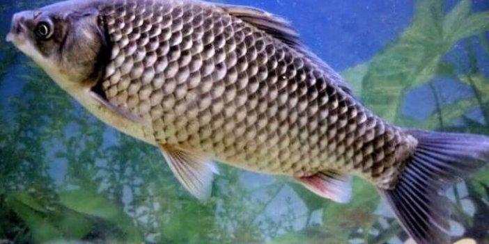 İsrail'i İran'dan balıklar koruyacak
