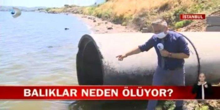 Kanal D muhabiri Küçükçekmece Gölü'ndeki esrarengiz olayı çözdü