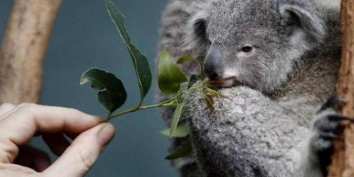 Ekosistem için acil önlem alınmalı! 2050'ye kadar soyları tükenebilir