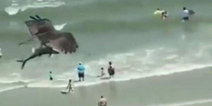 Kartal pençeleriyle köpek balığını böyle avladı