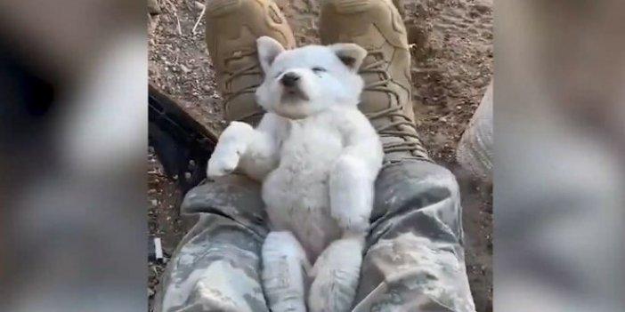 Mehmetçik yine gönülleri fethetti: Yavru köpeği ayağında sallayarak böyle uyuttu!