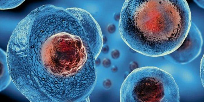 Kök hücre tedavisi nedir? Kök hücre tedavisi nasıl yapılır?