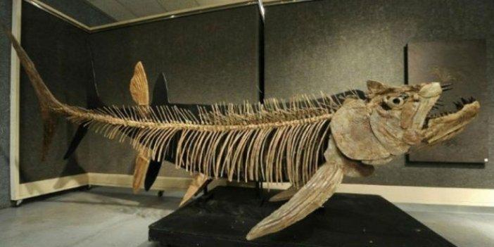 244 milyon yıl öncesine ait balık fosili bulundu