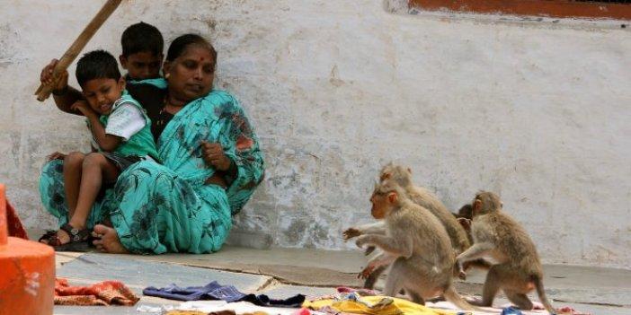 Maymunlar anne ile 4 çocuğunu öldürdü