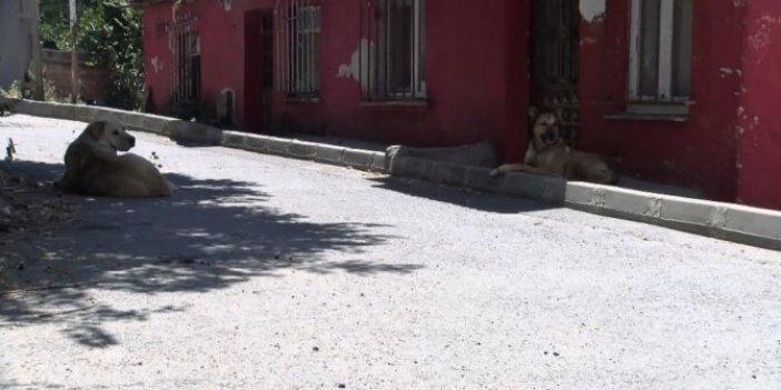 Hayvansever ailenin evini taşladılar! Sebebi şok etti