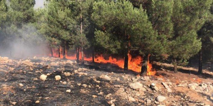Şanlıurfa'da korku saçan orman yangını