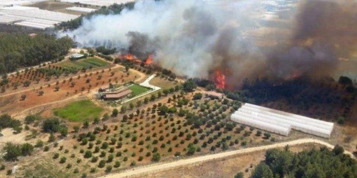 Antalya'da orman yangını: Alevler seralara dayandı
